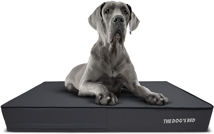 8. The Dog's Bed Arthritis Orthopedic Dog Bed